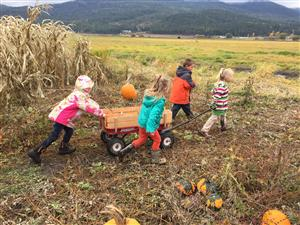 Working together to gather up the pumpkins.