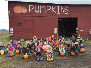 Look at all of our pumpkins!