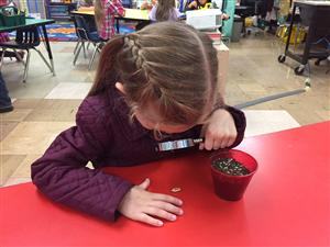 Aryah is using a scientific tool (magnifying glass) to observe her pumpkin seed.